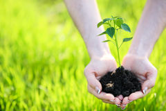 Young plant. In hand outdoors stock photo