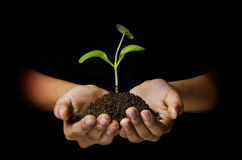 Free Young Plant Royalty Free Stock Image - 24452566