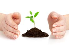 Young plant. Human hands hold and preserve a young plant Stock Photography