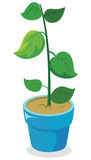 Young plant. Fresh young plant vector illustration Stock Photography