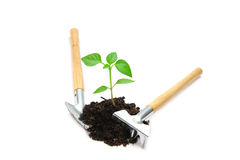 Young  plant Royalty Free Stock Photos