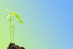Young plant against blue and green background Stock Photos