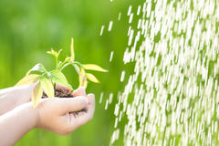 Young plant against green background Stock Photos