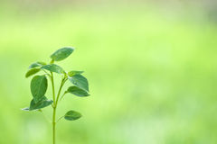 Young plant against natural green background Royalty Free Stock Photo