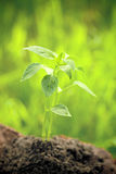Young plant against natural green background Stock Photos