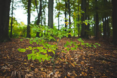 Young plant against tree trunks in forest Royalty Free Stock Photos