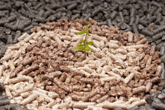 Save the Nature. Young plant amoung  different kind of pellets Stock Photos