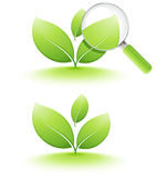 Young plant analyzing. Young green plant analyzing, on white vector illustration