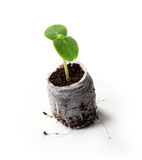 Young plant in bag Stock Image
