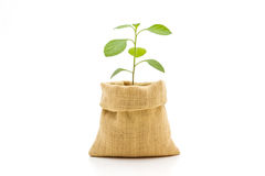 Young plant in bag. Stock Images