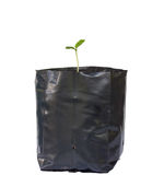 Young plant in bags. Stock Photos