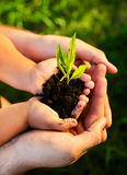 Young plant in childrens hands Royalty Free Stock Images