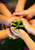 Young plant in childrens hands Royalty Free Stock Photography
