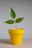 Young plant in  clay pot. Royalty Free Stock Photography