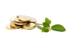 Young plant and coins Royalty Free Stock Images