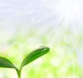 Young plant with a droplet Stock Images
