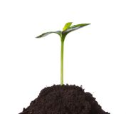 Young plant in earth, concept of new life Stock Photography