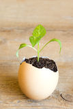 Young plant in egg Stock Images