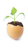 Young plant  in eggshell Royalty Free Stock Image