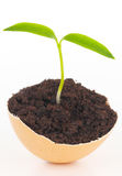 Young plant in eggshell Royalty Free Stock Photos