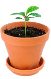 Young plant in flower pot. Stock Photo