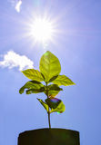 Young plant fresh new life sun power flare. Young plant fresh new life on sun power flare royalty free stock photography