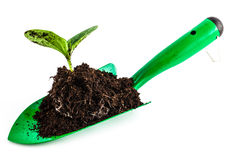 Young plant on gardening tool Stock Photography
