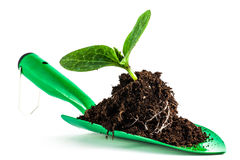 Young plant on gardening tool Royalty Free Stock Photo