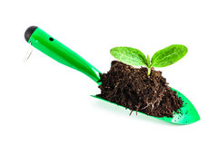 Young plant on gardening tool Royalty Free Stock Images