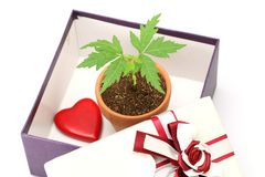 Young plant in a gift box Stock Photography