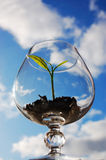 Young plant in a glass. Sprout in a glass against blue sky background stock photo