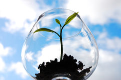 Young plant in a glass. Sprout in a glass against blue sky background royalty free stock photography