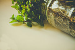 Young plant in a glass jar Stock Photo