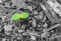 Young plant on grey background, concept new life Royalty Free Stock Photo