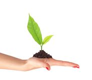 Young plant in ground on woman hand isolated Stock Photography