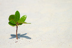 Young plant growing on beach Royalty Free Stock Photo