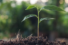 Young plant growing on brown soil Stock Images