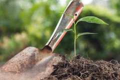 Young plant growing on brown soil with shovel Stock Photography