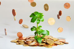 Young plant growing on coins. Coins are falling on a heap of money with a growing plant stock images