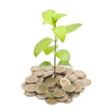 Young plant growing from coins Stock Photo