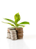 Young plant growing from coins Stock Image