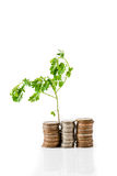 Young plant growing from coins Stock Images