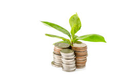 Young plant growing from coins Royalty Free Stock Photo