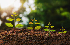 Young plant growing concept idea and sunligh Stock Photos