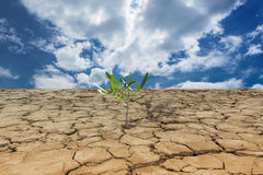Young plant growing on drought land under the sky Royalty Free Stock Image
