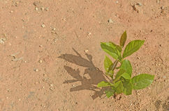 Young plant growing on the dry soil Royalty Free Stock Image
