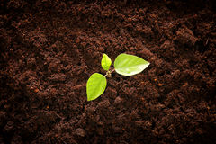 Young plant growing in fresh ground. new start and ecology concept. Top view of image young plant growing in fresh ground. new start and ecology concept Stock Photo