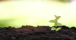 Young plant growing in garden soil stock footage