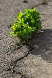Young plant growing through the ground, hope concept Royalty Free Stock Image