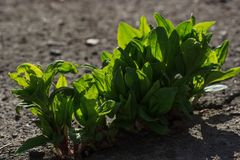 Young plant growing through the ground, hope concept Stock Photo
